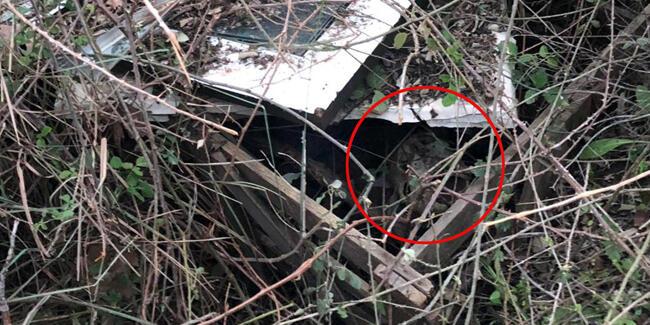 Çoban dere kenarında insan kafatası buldu