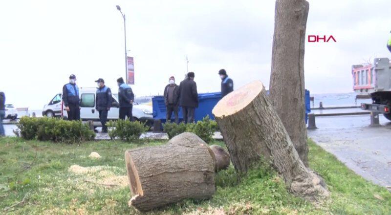 Ağaç kesene fidan dikme cezası
