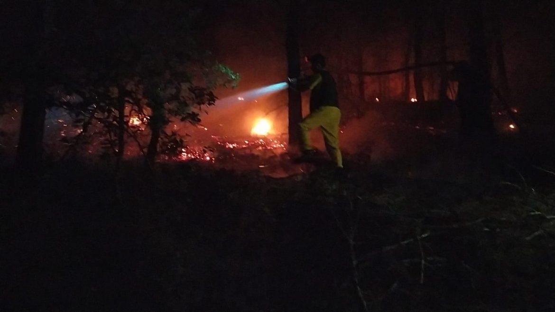 Adana'nın Kozan ilçesinde orman yangını