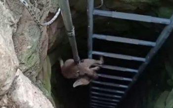 15 metrelik kuyuya düşen tilkiyi itfaiye kurtardı