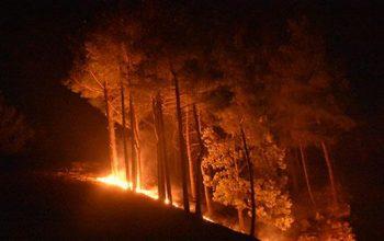 Antalya'da bir yangın daha! Geniş bir alana yayıldı