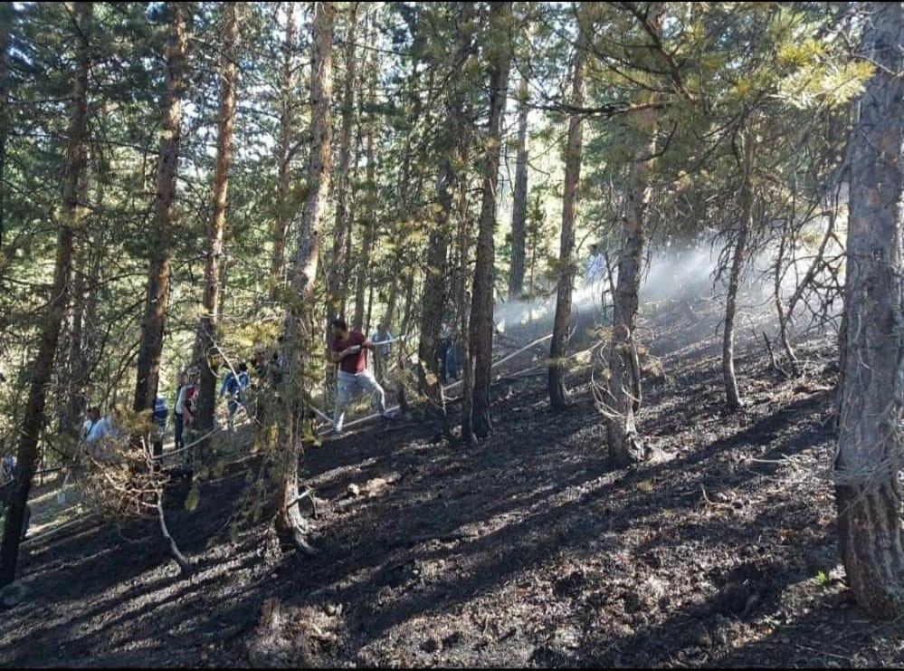 Erzincan'da orman yangını 2 saatte söndürüldü