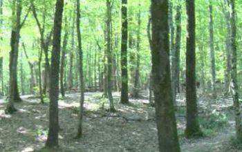 Orman yakmanın cezası ağır