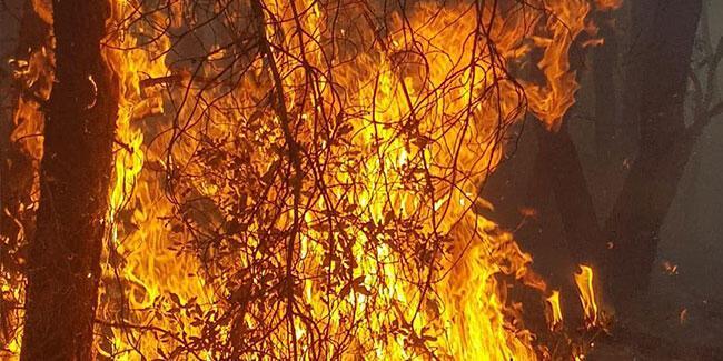 Son dakika… Kütahya'da 4 farklı noktada yangın!
